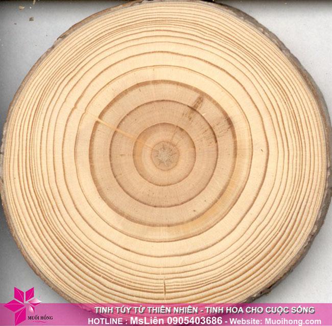 gỗ thông phần lan 1